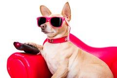Hållande ögonen på tv för hund på soffan Fotografering för Bildbyråer