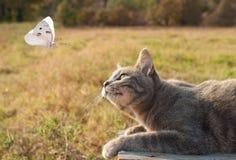 hållande ögonen på white för blå tabby för fjärilskattpott arkivbild
