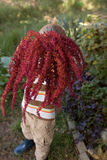 Hållande amaranthblommor för pojke Arkivfoton