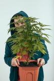 Hållande cannabisväxt för man Fotografering för Bildbyråer