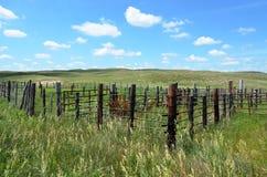 Hållande fålla och staket Arkivfoto