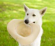 Hållande hatt för hund i hans mun Arkivbilder