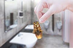 Hållande kackerlacka för hand på toalettbakgrund Arkivbilder