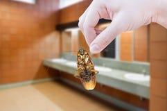 Hållande kackerlacka för hand på toalettbakgrund Arkivbild