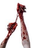 Hållande kedja för blodig hand, blodig kedja, halloween tema, vit bakgrund som isoleras Royaltyfria Foton