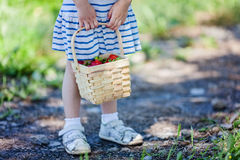 Hållande korg för liten flicka som är full av mogna jordgubbar på hackan dina egna lantgård Arkivfoto