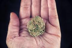 Hållande marijuanaknopp för hand fotografering för bildbyråer