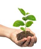 Hållande planta för hand royaltyfri foto