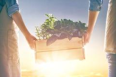 Hållande plantor för vuxen människa och för barn arkivbilder