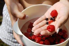 Hållande röda hallon och vinbär i handen Royaltyfri Fotografi