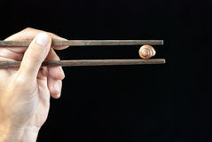 Hållande snigel Shell Using Chopsticks för hand fotografering för bildbyråer