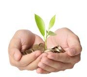 Hållande växt som spirar från mynt för en handfull Arkivfoton