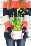 Hållande vit blomkruka för kvinna med den snöig skogen för påskliljavinter Arkivfoton