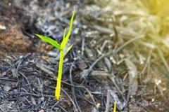 Hållbarhet gröna plantor i nytt livbegrepp Arkivbild