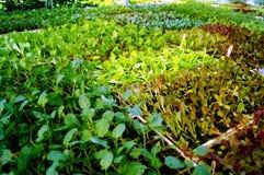 Hållbart lantbruk i södra Florida Royaltyfri Bild