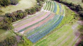 Hållbart plantera Arkivfoton