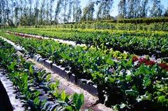 Hållbart tomatlantbruk i södra Florida Arkivfoto