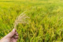 Hållen av risfältet är torr Royaltyfria Bilder