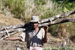 Hård funktionsduglig man som bär en trädstam - MADAGASCAR Arkivbilder