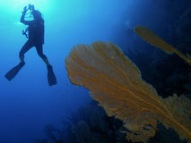 hård korall Arkivfoton