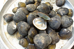 Hård mussla Arkivbild