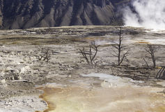 Hård Yellowstone miljö Royaltyfria Foton
