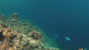 Hårda och mjuka koraller 4K arkivfilmer