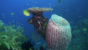 Hårda steniga koraller och färgrik fisk i det blåa havet arkivfilmer