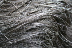 hårhuvud Royaltyfri Bild