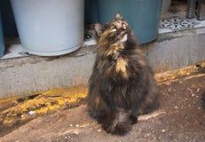 Hårig katt Fotografering för Bildbyråer