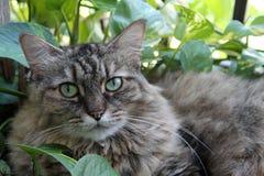 Hårig katt i trädgård 01 royaltyfria bilder