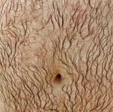 Hårig mage. Arkivbilder