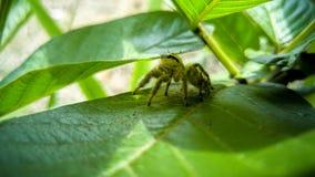 hårig spindel royaltyfri fotografi