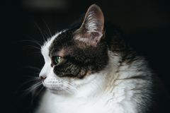 Hårig vit synad kattgräsplan arkivfoto