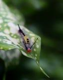 Håriga Caterpillar Royaltyfria Foton
