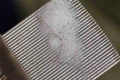 hårkamlouse Arkivfoton