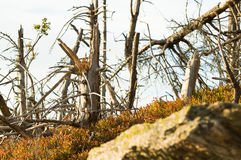 Hårt klimat i bergen, brutna torra träd royaltyfria bilder