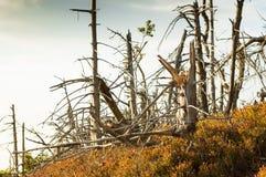 Hårt klimat i bergen, brutna torra träd fotografering för bildbyråer