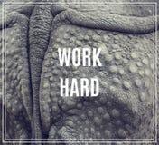 Hårt ordarbete Closeup av den starka harnesken av en noshörning royaltyfria bilder