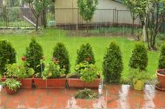 Hårt regna i en trädgård royaltyfri fotografi