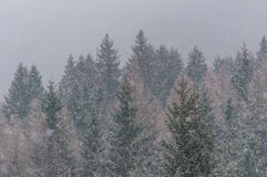 Hårt snöa Royaltyfri Fotografi