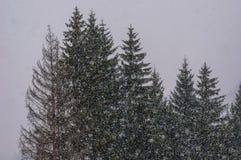 Hårt snöa Fotografering för Bildbyråer