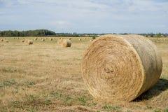 Hé petits pains 1 Images stock
