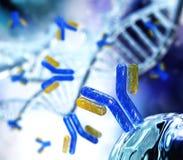 Hélice d'anticorps et d'ADN, immunoglobulines images libres de droits