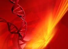 Hélice de la DNA Imagen de archivo libre de regalías