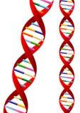 Hélice de la DNA Imágenes de archivo libres de regalías