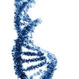 Hélice de la DNA aislada en blanco Imagen de archivo libre de regalías