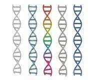 Hélice de la DNA o estructura de la DNA Foto de archivo libre de regalías