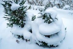 Hélice de neige sur un arbre Image stock