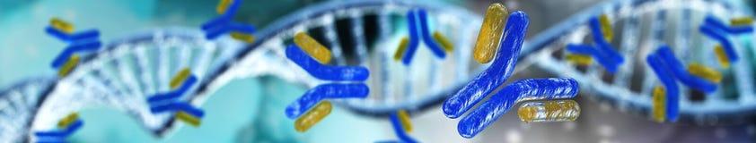 Hélice del anticuerpo y de la DNA, inmunoglobulinas Fotografía de archivo libre de regalías